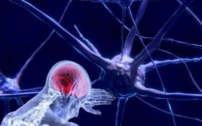 La naissance des neurosciences (1re partie)